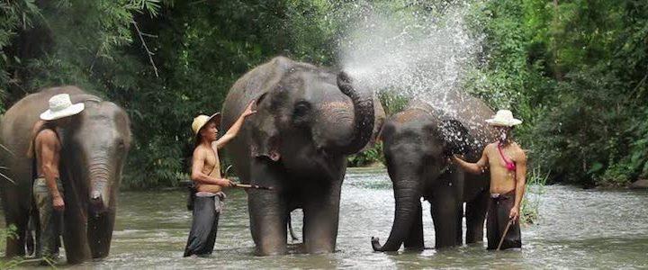 Thailand Specials
